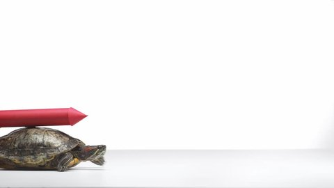 turtle with red paper rocket on shell crawling sideways isolated on white
