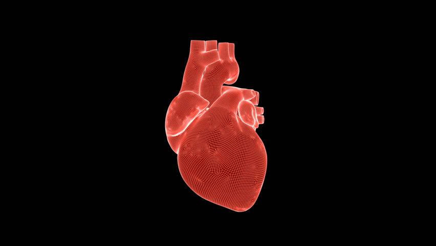 Beating human heart wireframe rotating against black, seamless loop | Shutterstock HD Video #1025605214