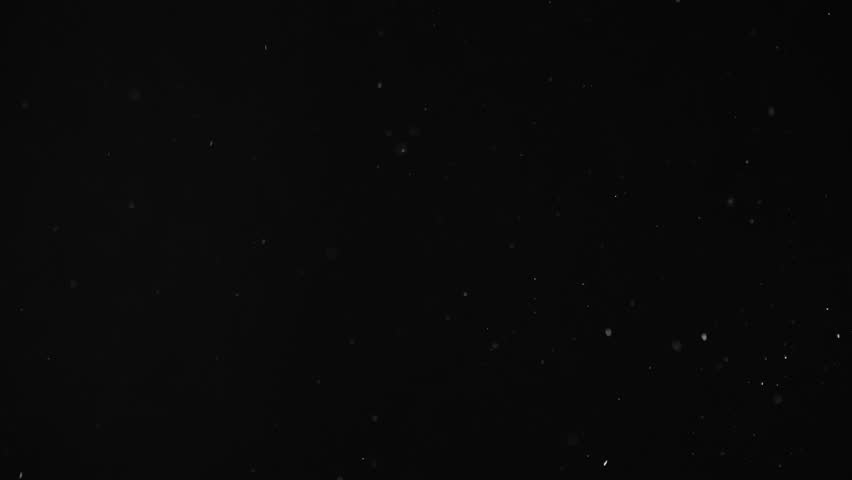 Natural Organic Dust Particles Floating On Black Background. Dynamic Dust Particles Randomly Float In Space With Fast And Slow Motion. Shimmering Glittering White Particles With Bokeh In The Air. | Shutterstock HD Video #1025620094