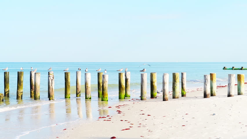 Old Naples, Florida pier pilings in gulf of Mexico with panning panorama of wooden jetty and many birds perched pelicans cormorants seagulls flying by ocean on beach | Shutterstock HD Video #1025628104