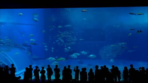 Silhouettes of visitors at an aquarium with Whale Shark and various kinds of fish swimming in the tank. Location: Okinawa Churaumi Aquarium, Japan.