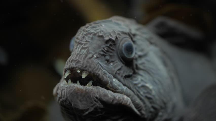 fish eye closeup #1025967974