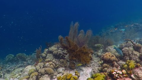 Tropical coral reef, swimming fish and sunlight. Colorful underwater seascape, scuba diving video. Marine wildlife in the blue ocean. Corals on the reef, white sand and school of swimming fish.