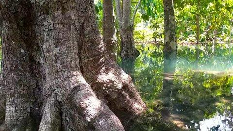 freshwater swamp forest. Krabi, Thailand. Beautiful swamp forest. amazing place. beautiful nature.