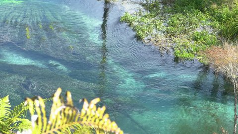 Point of view: watching a small fish swim in the pristine glowing blue waters. Blue Spring Putaruru. New Zealand. closer shot.