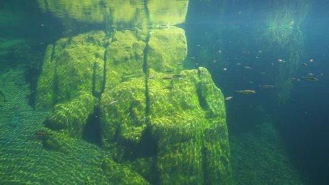 A large rock underwater in a river with chub fish Squalius cephalus, La Muga, Girona, Alt Emporda, Catalonia, Spain