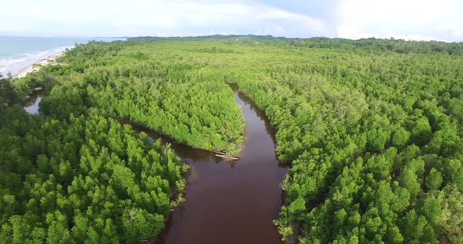 Aerial view of mangrove forest at Kuala Penyu Sabah Borneo, Malaysia. Aerial footage | Shutterstock HD Video #1026756164