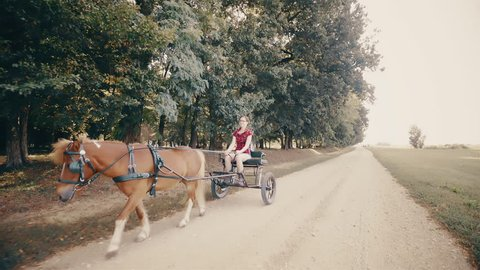 Person riding the pony horse carriage. Gimbal stabilizer tracking a female person in focus sitting on a carriage being pulled by a pony horse. Forest in background.