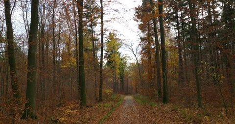 Colorful late autumn season atmosphere pathway in misty mountain range forest Elm - Germany / Colorful late autumn season atmosphere pathway in misty mountain range forest Elm - Germany
