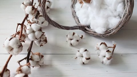 Cotton plant white fluffy flowers and basket on wooden table