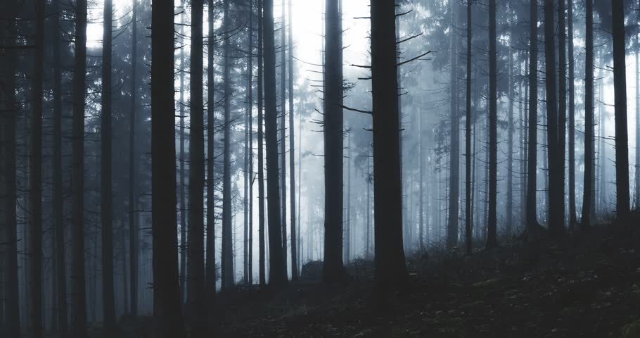 Dark blue foggy conifer forest landscape.  | Shutterstock HD Video #1027624544