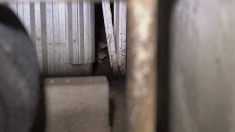 rats in garbage boxes. A hidden part of big cities