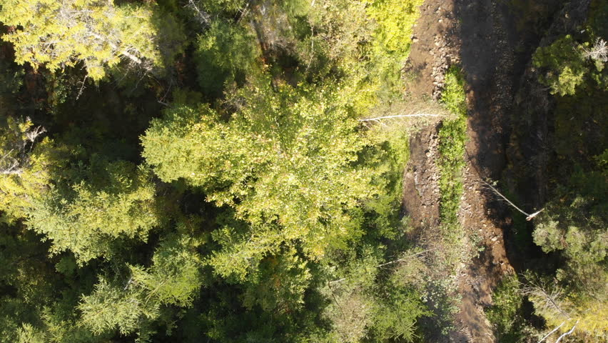 Aerial shot of a mountaneous brook with sparkling water and a tree in summer | Shutterstock HD Video #1027774004