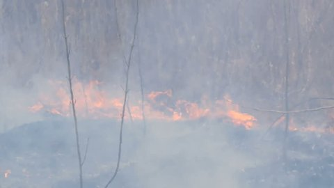 Spontaneous fire in nature, burning grass, forest, trees, bushes. Huge area of burnt land
