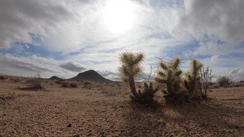 Cloud Time Lapse over Teddy Bear Cholla Cactus in Mojave Desert landscape