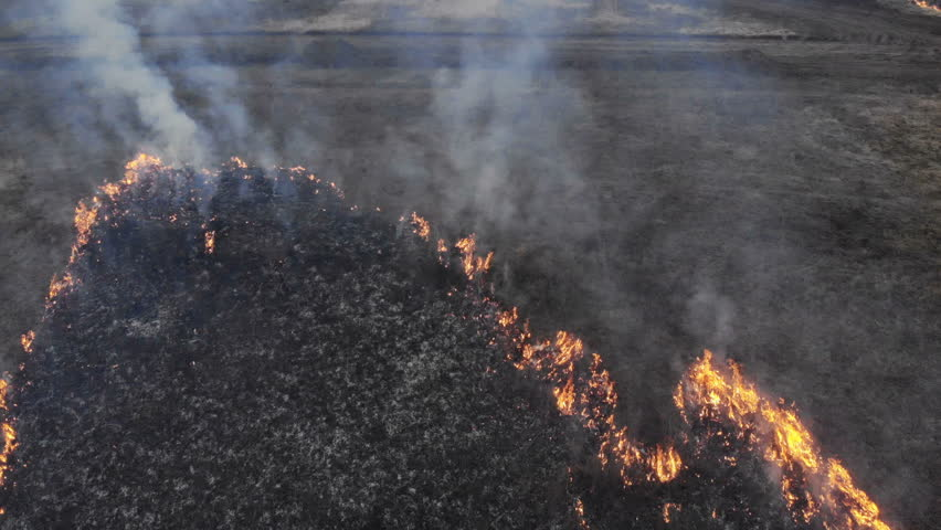 Close up of tongues of fire and burning culms. Corn field burns off, eco problem, environmental protection concept. | Shutterstock HD Video #1028048714