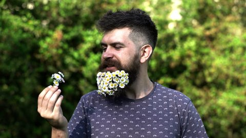 A bearded man with a decorated beard for the Spring holiday. Flower in the beard. Freshness concept. Guy with daisy or chamomile flowers in beard. Man with beard and mustache enjoy spring