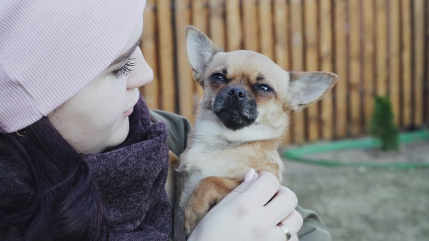 Girl holding Chihuahua outdoor  | Shutterstock HD Video #1028420114