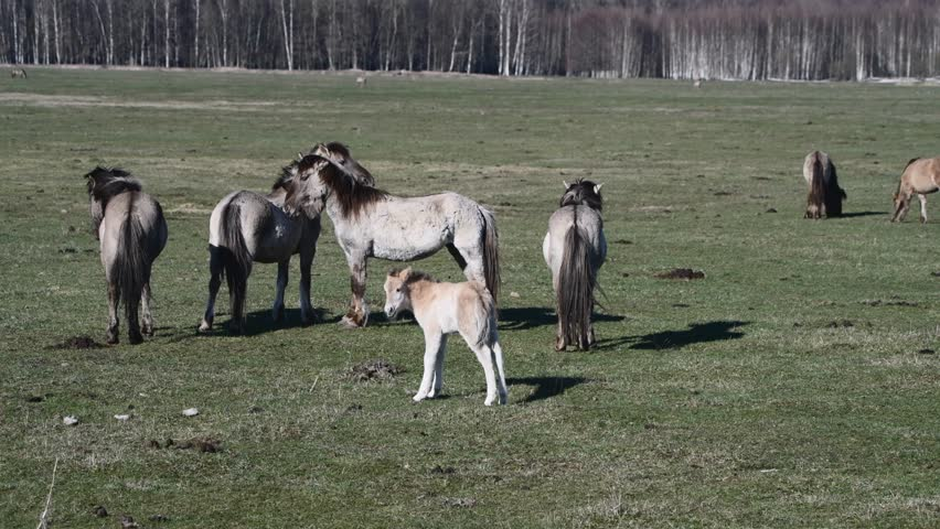 Rabid Horses In Germany! - 852×480