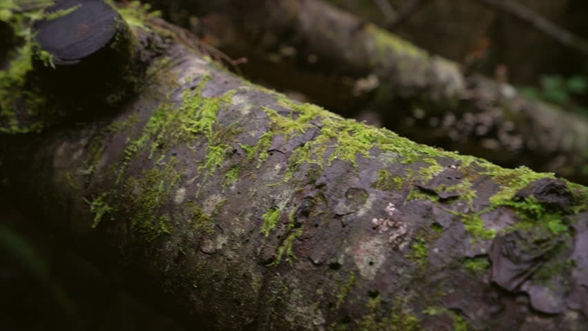 Old decayed tree trunks with moos lie on the forest floor | Shutterstock HD Video #1028745404