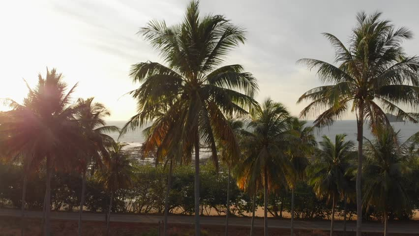 Palm trees forrest in the morning, Droneshot | Shutterstock HD Video #1029009944