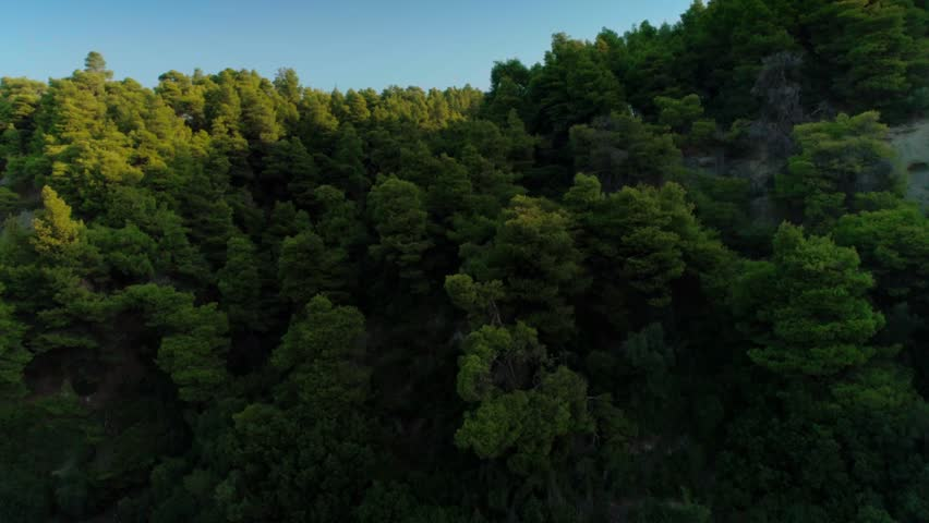 Aerial shot beautiful fluffy top green trees surrounded by sunshine at sunset shooting from helicopter flying over dense summer forest horizon line and clear blue sky in background in Greece