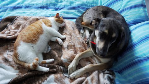 Cat and dog laying on bed together