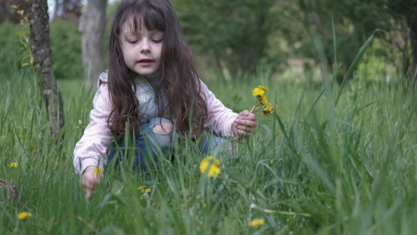 Child with dandelions. Little girl collects dandelions.