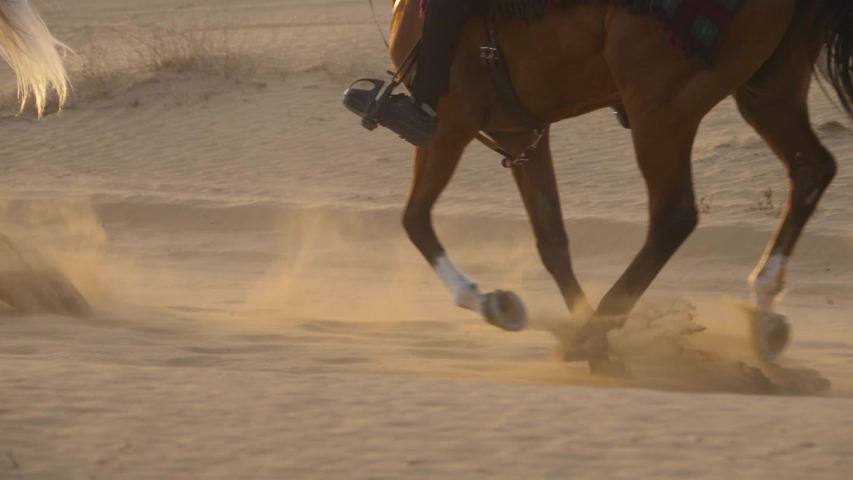 HD slow motion, detail image of an arabian horse galloping on a endurance through a desert of Dubai. The legs of the animal raise sand each time they rest on the ground.