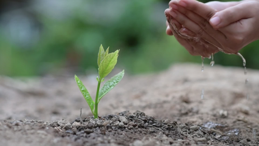 In the hands of trees growing seedlings. Bokeh green Background Female hand holding tree on nature field grass Forest conservation concept #1029985244