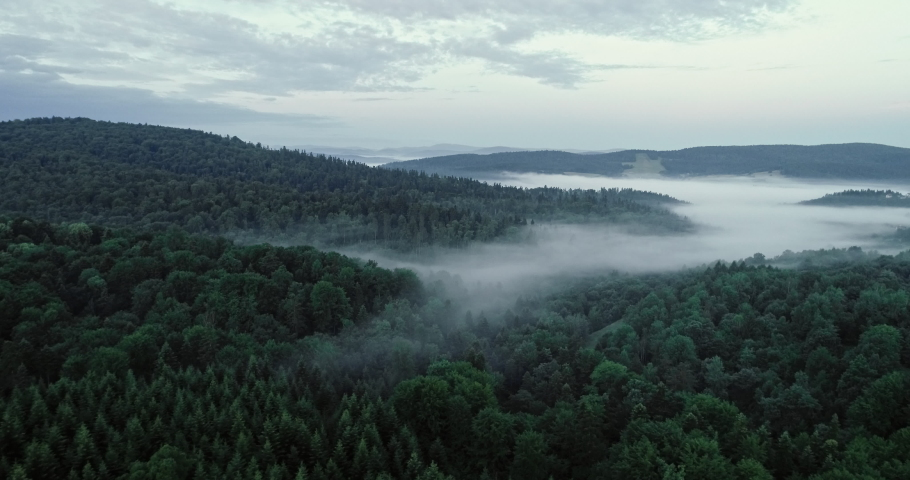 The drone flies above the trees. | Shutterstock HD Video #1030240244