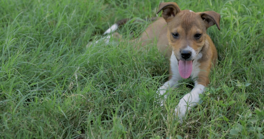 A cute 8 week old puppy playing in the grass with an older dog. #1030747484
