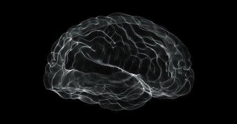 Hologram representation screen 3d of brain in the human body - loop