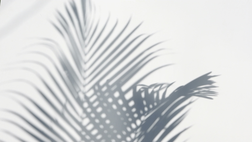 Closeup the motion of shadow palm leaves on a white wall background. | Shutterstock HD Video #1031085524