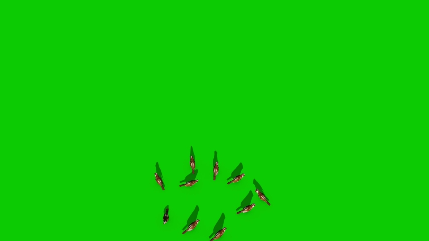 Sparrow Flock Fly Green Screen Top 3D Rendering Animation Chroma Key | Shutterstock HD Video #1031450804