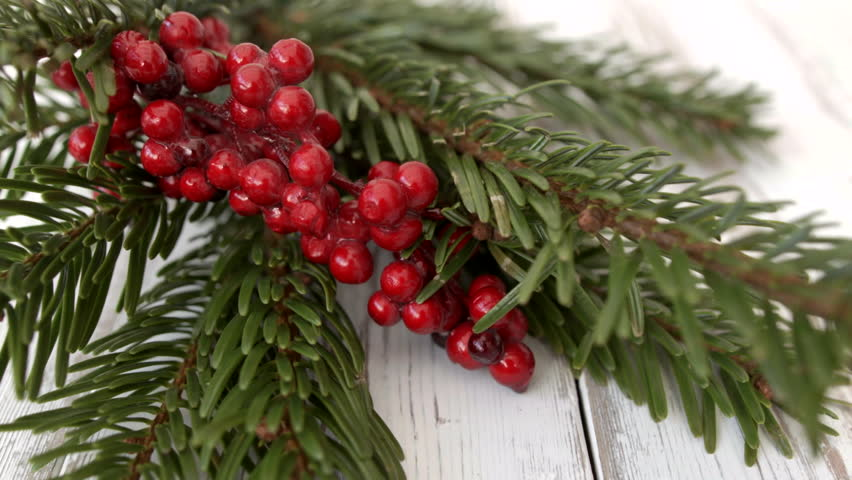 Pine tree with red berries close up stock footage video 12304 nordman spruce pine needle branch hd stock footage close up dolly shot of a nordman mightylinksfo Gallery