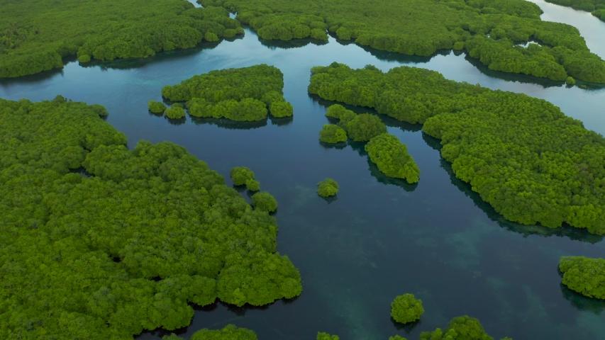 Flooded amazonian rainforest in Negro River, Amazonas, Brazil