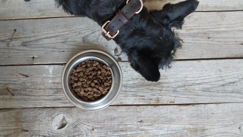 Dog food concept - dog eating dry food from bowl, top view | Shutterstock HD Video #1032535034