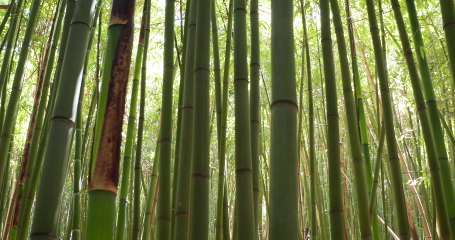 Close up of scenic bamboo tree forest used as renewable sustainable energy resource and different  types of eco -friendly green products. | Shutterstock HD Video #1032602114