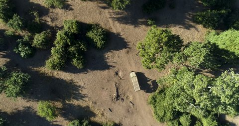 Straight down aerial view of a 4x4 safari vehicle driving in Gonarezhou National Park, Zimbabwe