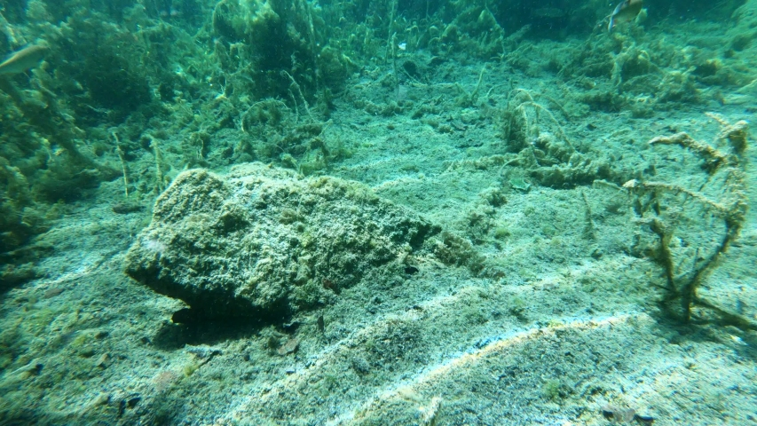 Underwater view of lake Bohinj bed floor with wood debris and other particles floating. #1034478704