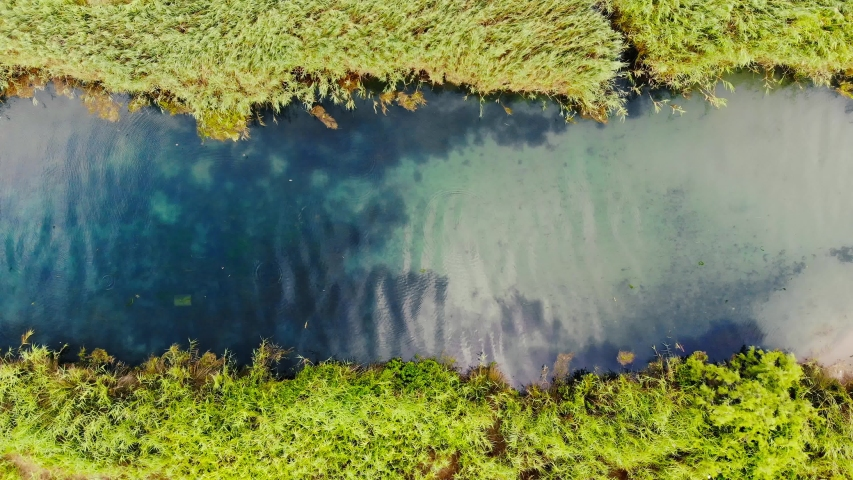 An overhead drone shot from an Aegean river and the fresh reed on it's bank. Swallows can be seen taking bath in the river. Taken in Akyaka (Gulf of Gokova, Aegean Sea) on a colorful spring afternoon. | Shutterstock HD Video #1034900054