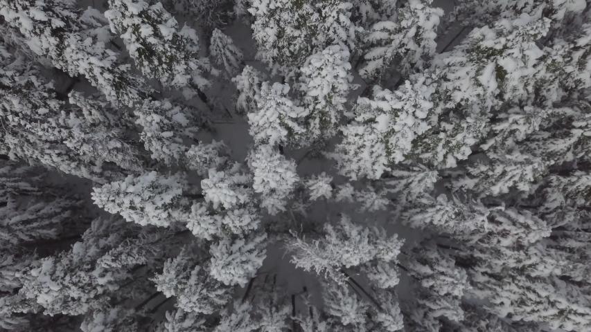 [D-LOG] 4K Snowy Mountain forest trees | Shutterstock HD Video #1035428924