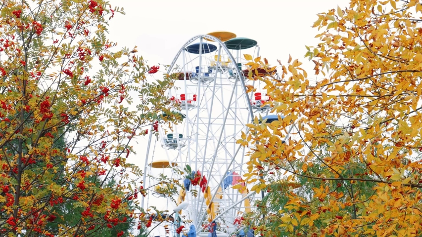 The Ferris wheel can be seen through the autumn trees in the city Park of culture and recreation. Yellow Rowan leaves and red berries.   Shutterstock HD Video #1035434894