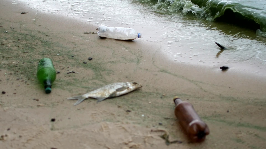 Dirty seashore with dead fish, waves collecting bottles and garbage, bad ecology | Shutterstock HD Video #1035465704