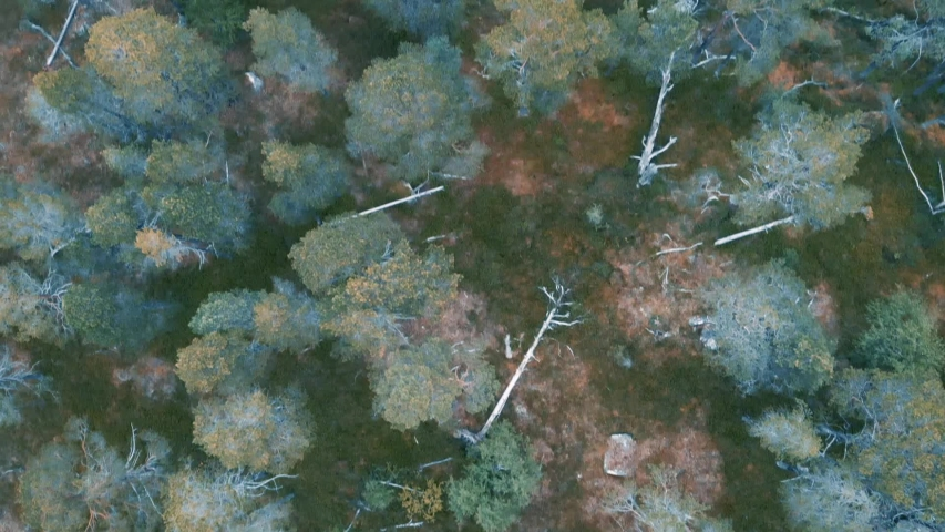 Top drone view over a pine forest in Northern Europe | Shutterstock HD Video #1035836444