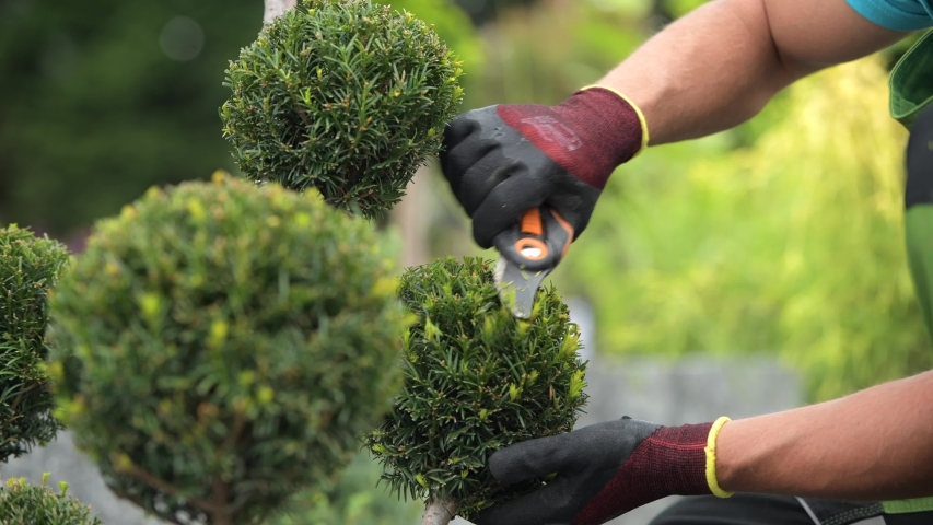 Caucasian Professional Gardener Trimming Decorative Trees in a Garden. Landscaping Industry | Shutterstock HD Video #1036833944