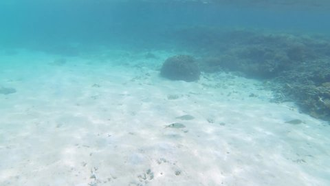 Underwater HD footage with tropical fish swimming on a sandy ocean bed with coral reefs in the clear waters at Isle Signal, New Caledonia, South Pacific.