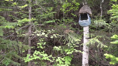 Colorful birdhouse hanging in the Siberian forest