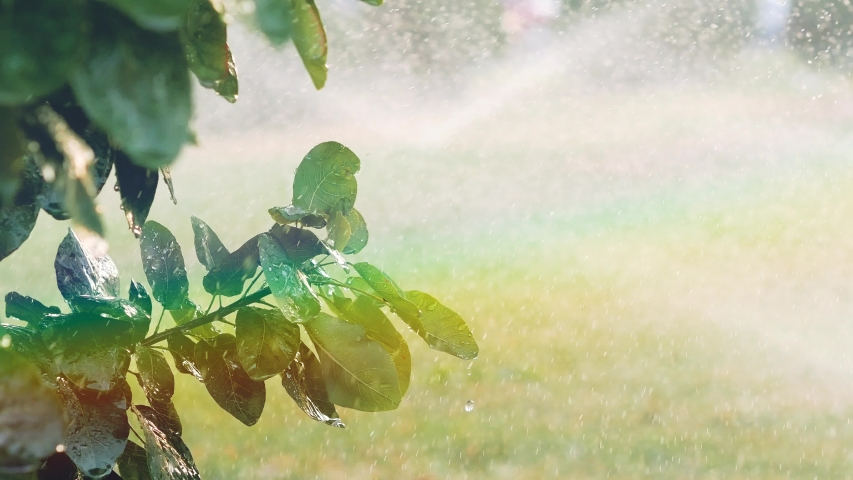 Rainbow appeared in spray from irrigators. Water from sprinklers dripping from the leaves 4k | Shutterstock HD Video #1037162354